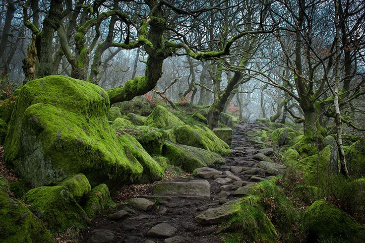 "Padley Gorge, Peak District, UK  ""This National Park has endless splendors to explore, like this creepy pathway straight out of a fairytale."""
