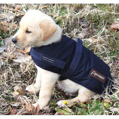 "Breathable Waterproof Dog Rain Coat Size: X-Small (8"" - 10"" D), Color: Navy Blue - http://www.thepuppy.org/breathable-waterproof-dog-rain-coat-size-x-small-8-10-d-color-navy-blue/"