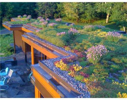 I want a green roof so bad!