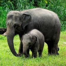 47 best Elefantes images on Pinterest | Animals, Elephant love and ...