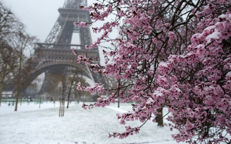 Snow covers Spring blossoms on the Champs de Mars near the Eiffel Tower in Paris, France.  Picture: EPA/IAN LANGSDON