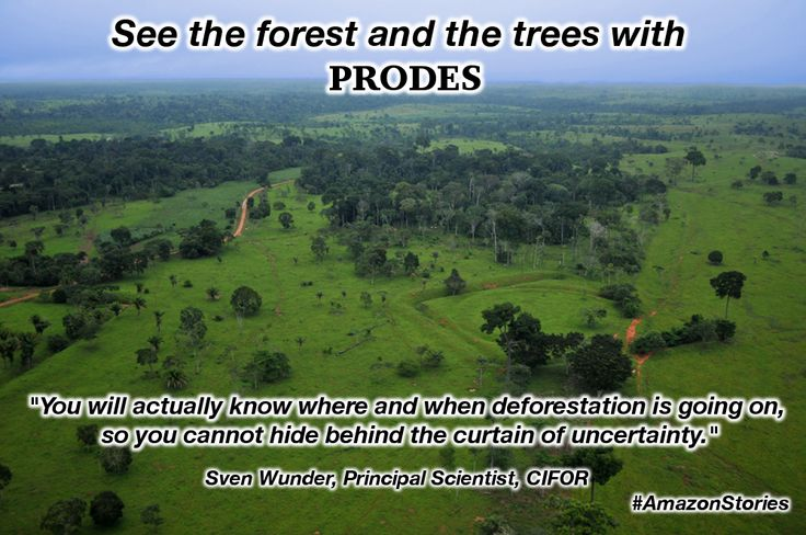 Knowing what where and when #deforestation is happening is crucial to preventing it in the long run. #AmazonStories #PRODES