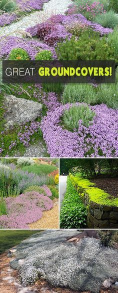 Great Groundcovers! • Tips and ground cover picks!, the perfect ground covers for hillsides and slopes.
