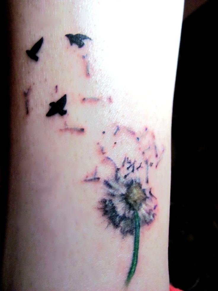 the birds are too harsh on this one... but dandelion is pretty and delicate...