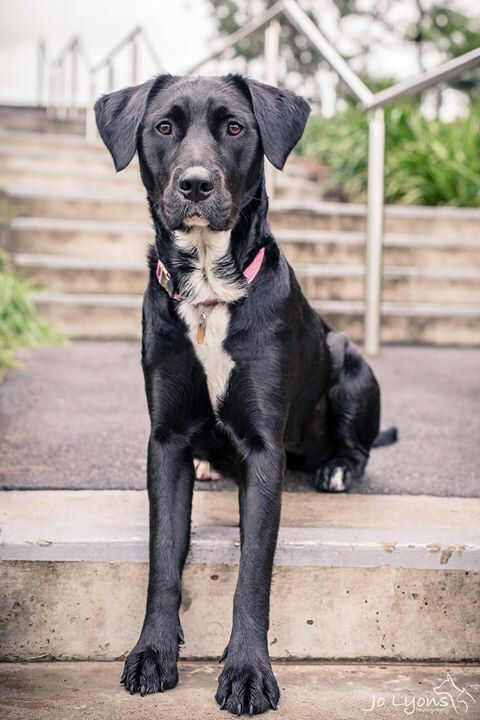 Here is gorgeous Roxy in full view... such a graceful and elegant girl <3