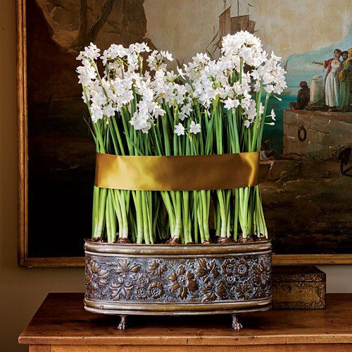 Paperwhite narcissus. ADDED TIP: Once the bulbs sport green shoots at the tips about 1-2 inches tall, replace the original water in the pot with a mixture of 1-part gin (or vodka) to 7 parts water. This results in paperwhites that are one-third shorter but three times happier. ;)