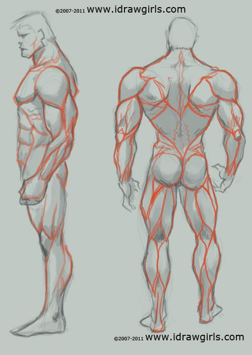 235 Best Art Study Anatomy Images On Pinterest Human Anatomy
