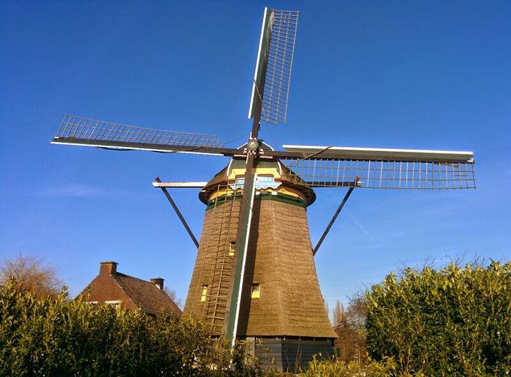 Nieuwe Veenmolen, Den Haag