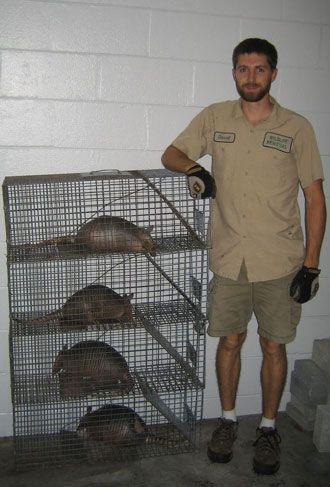 Armadillos caught in Havahart® traps! #animals #trapping # ...