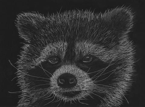 "This artwork is a pastel and charcoal drawing of a racoon entitled ""Cheeky Little Guy"" by Australian artist Tracey Everington - the creator of Tracey Lee Art Designs."