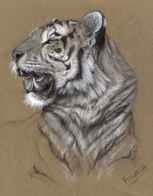 Tiger by Vermin-Star on DeviantArt