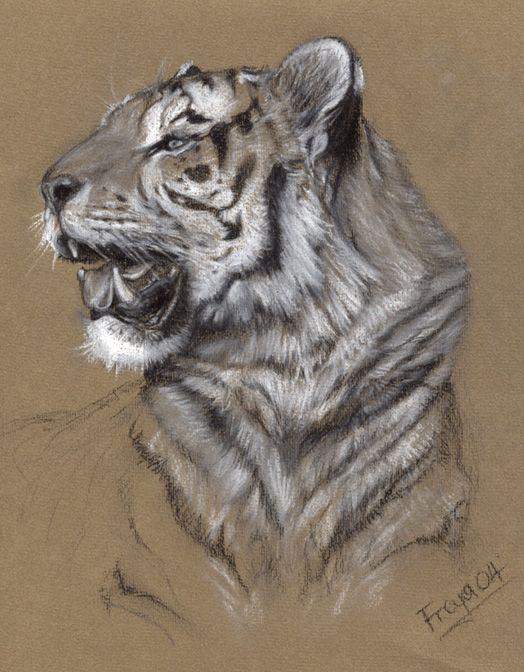 Tiger by Vermin-Star on DeviantArt