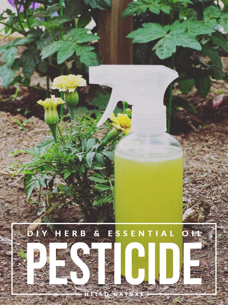Rid your garden of unwanted pests in a natural way with this easy to make Herb and Essential Oil Pesticide DIY so you can enjoy your fresh veggies!