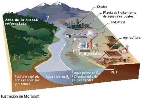 La contaminación del agua: tipos, fuentes y efectos producidos http://www.biodisol.com/biocombustibles/la-contaminacion-del-agua-tipos-fuentes-y-efectos-contaminacion-ambiental-cambio-climatico/