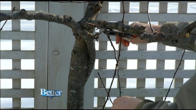 Better Gardens: Trimming Your Fruit Trees with Julie Harrison
