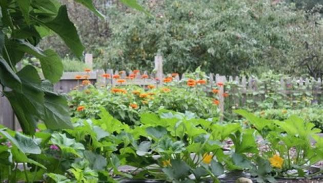 AAS Display Garden University Of Rhode Island Botanical Gardens, Kingston,  RI | AAS Display Gardens | Pinterest | Rhode Island, Rhodes And Rhode Island  ...