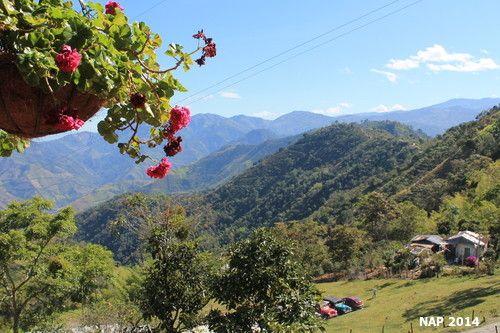 La riqueza de #Flores  que acompañan las #Montañas de #Salamina . Sus #Colores #Magicos #Colombiarealismomagico #Colombia