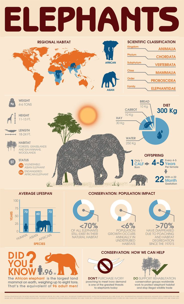 A WikiGraphic About Elephants From Behance    If youre new to the Elephant world and would like to get yourself up to speed on facts about elephants this Wiki-Infographic is a great starting point. Share it with your friends and help raise awareness about the worlds largest land mammal. This infographic by Stephanie Blackwell covers everything about elephants including regional habitat scientific classification dietary information reproduction statistics average lifespan population trends…