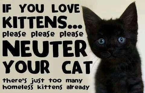 Adopt a kitten from a local shelter today. Spay and neuter!