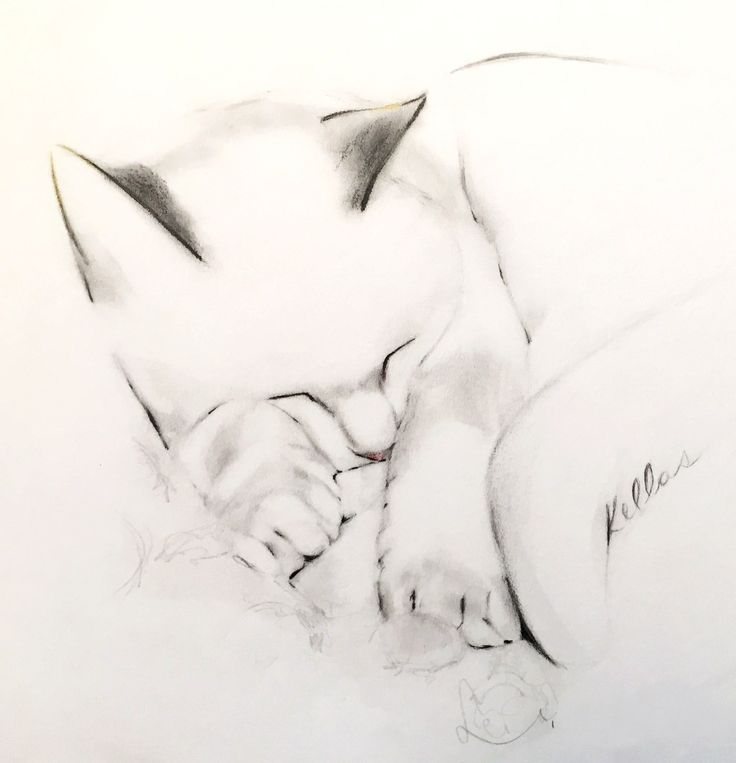 "Drawings of cats in ink, charcoal and pencil.  ""When a man loves cats, I am his friend and comrade, without further  introduction.""  - Mark Twain"