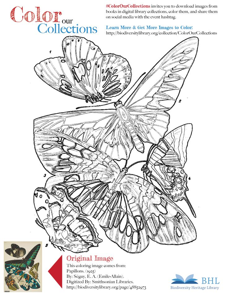 """#ColorOurCollections. Original Image: http://biodiversitylibrary.org/page/48852973. To download this image, right click on the pin and choose """"save image as"""" to save the image to your computer. You can then print and color at your leisure!"""