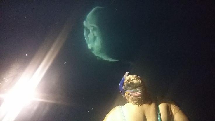 Mantas at Fesdu Lagoon by Night september 2014