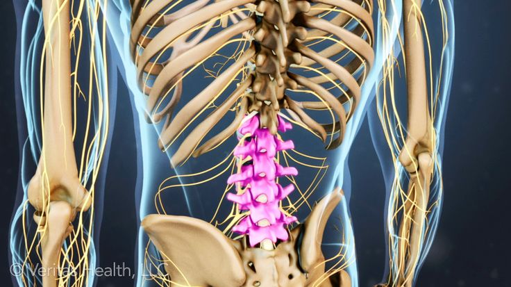 Understanding Lower Back Anatomy