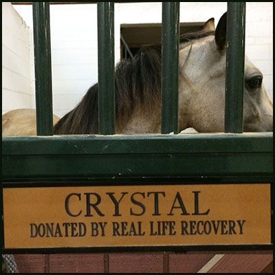 """Meet """"Crystal"""", the pony that Real Life Recovery donated to Horses Healing Hearts! Real Life Recovery also supplied a financial donation so that Crystal's care will be covered and then some! Crystal will join the other horses as a therapy horse for children raised with addiction in their homes.#gooddeeds #charitablegiving #addiction #treatment #givingback"""