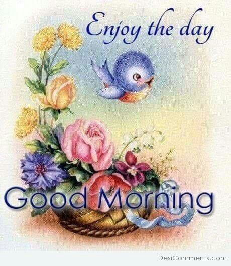 Good Morning Zedge : Images about have a nice day on pinterest good
