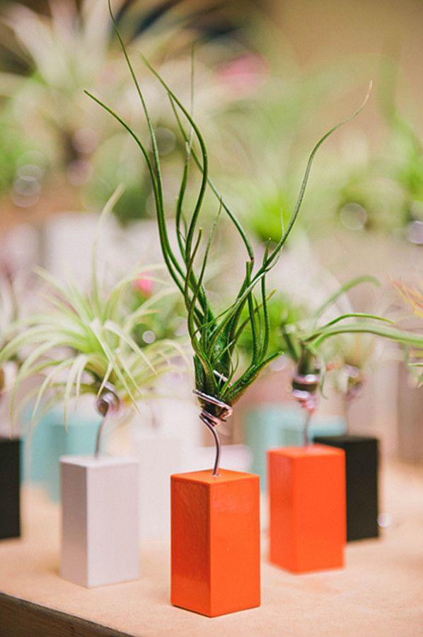 17 best steel vessel images on pinterest air plants indoor house plants and indoor plants. Black Bedroom Furniture Sets. Home Design Ideas