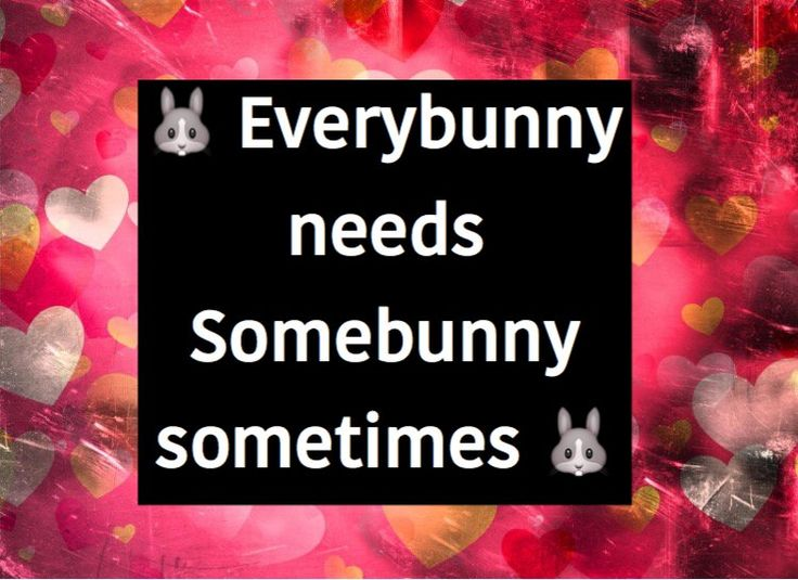 Best 25+ Bunny Quotes Ideas On Pinterest