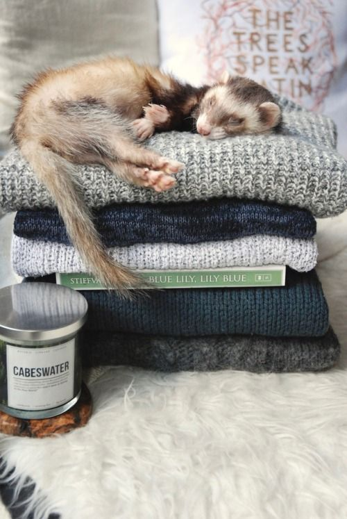 """the-book-ferret: """"Sweater Weather is upon us… """""""