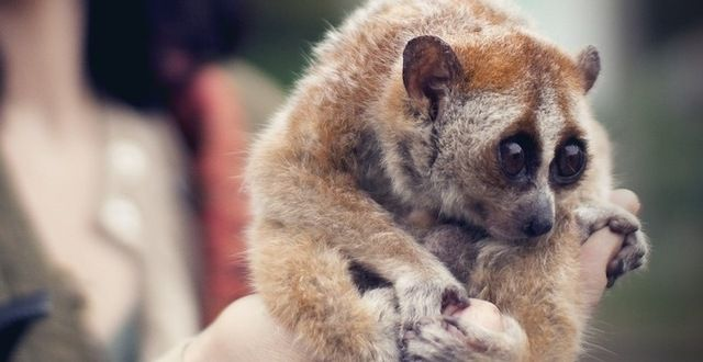 how to volunteer to help endangered animals
