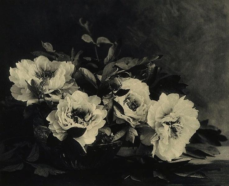 E Louise Marillier Peonies 1912