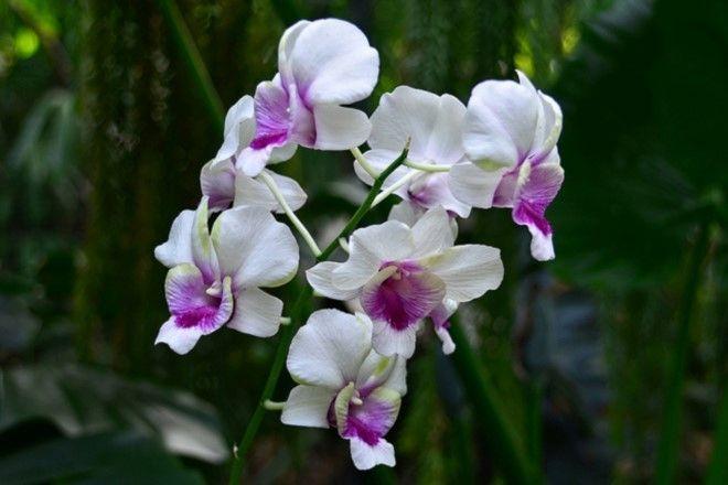 Orchid House Bloemfontein