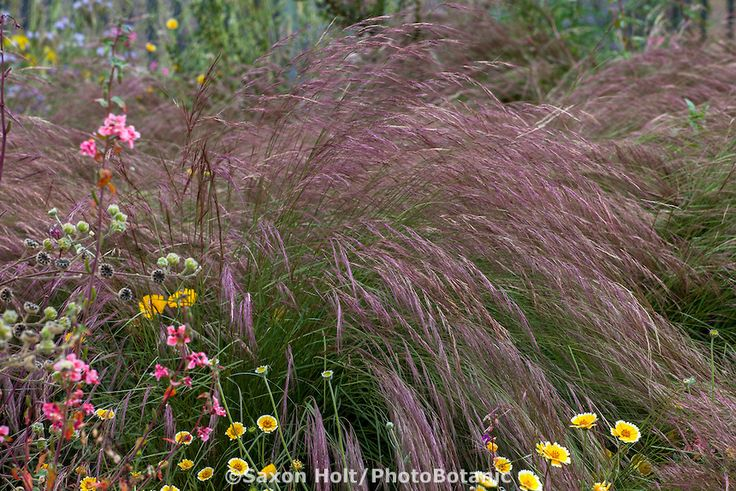 17 Best Images About Great Plants For Socal Gardens On