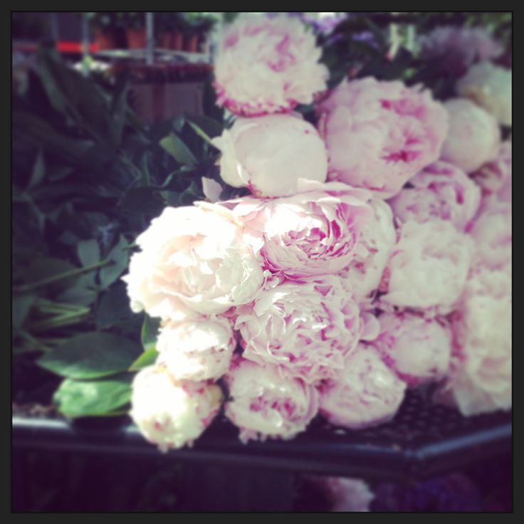 Sweet scented peony roses in Copenhagen  #valentines #adore #lovelucy #romance #sayitwithflowers