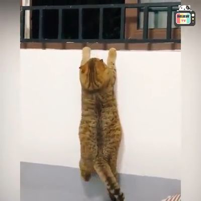 Cats acting funny or weird.