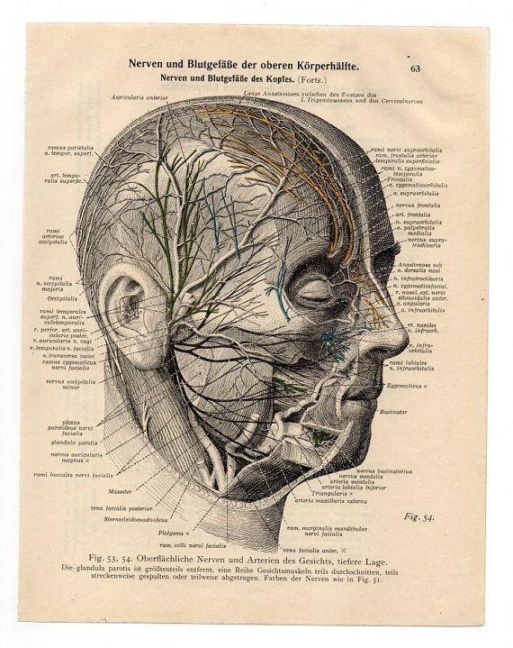 1933 medical Vintage Illustration Print skull skeleton anatomical anatomy page nude human body old anatomic freak diagram bones brain