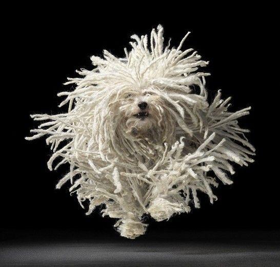 Tim Flach, foto d'autore per cani - Repubblica.it