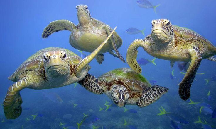 18 Besten Ninja Turtles Bilder Auf Pinterest: 88 Besten Anna Maria Island Sea Turtle Life Bilder Auf