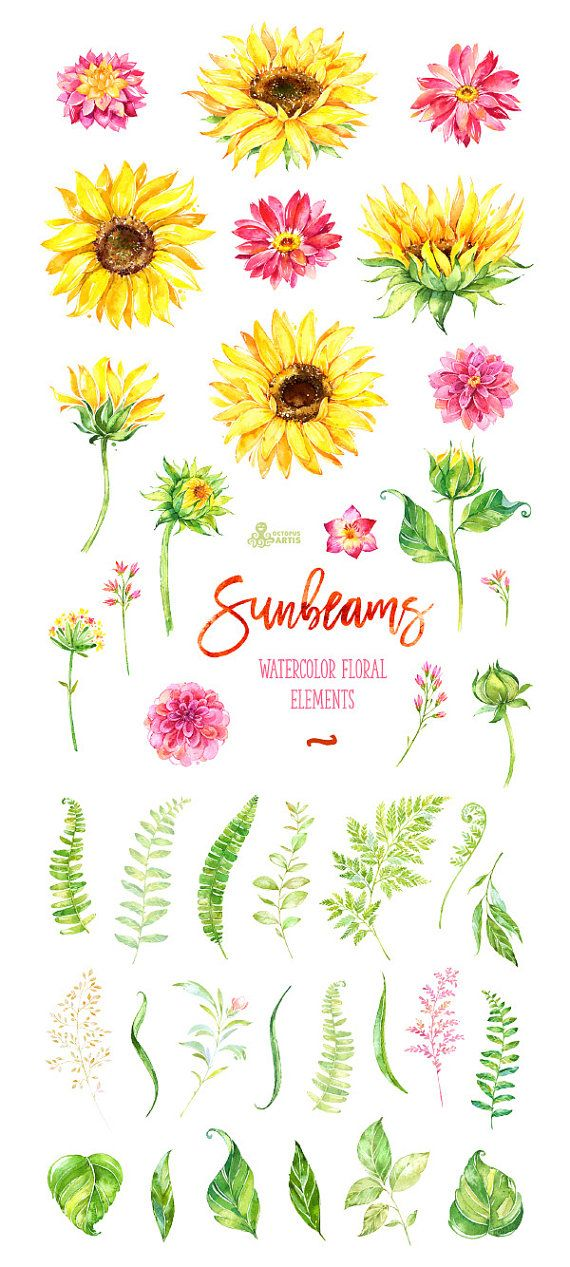 This sunny set of hand painted watercolor floral Elements. Perfect graphic for diy projects, wedding invitations, greeting cards, photos, posters, quotes and more.  -----------------------------------------------------------------  INSTANT DOWNLOAD Once payment is cleared, you can download your files directly from your Etsy account.  -----------------------------------------------------------------  This listing includes:  39 x Separate Floral Elements in PNG with transparent background…