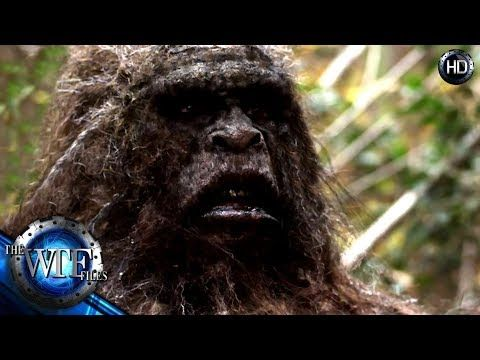 HAS THE REAL BIGFOOT OR SASQUATCH BEEN FOUND? SCIENTIST SAY YES AND THE DNA PROOF IS IN! - YouTube