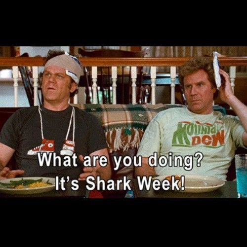 And you don't turn off the TV on Shark Week!