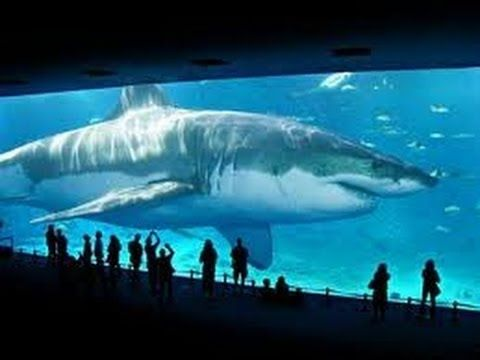 Watch Megalodon Giant Killer Shark Full Documentary - YouTube