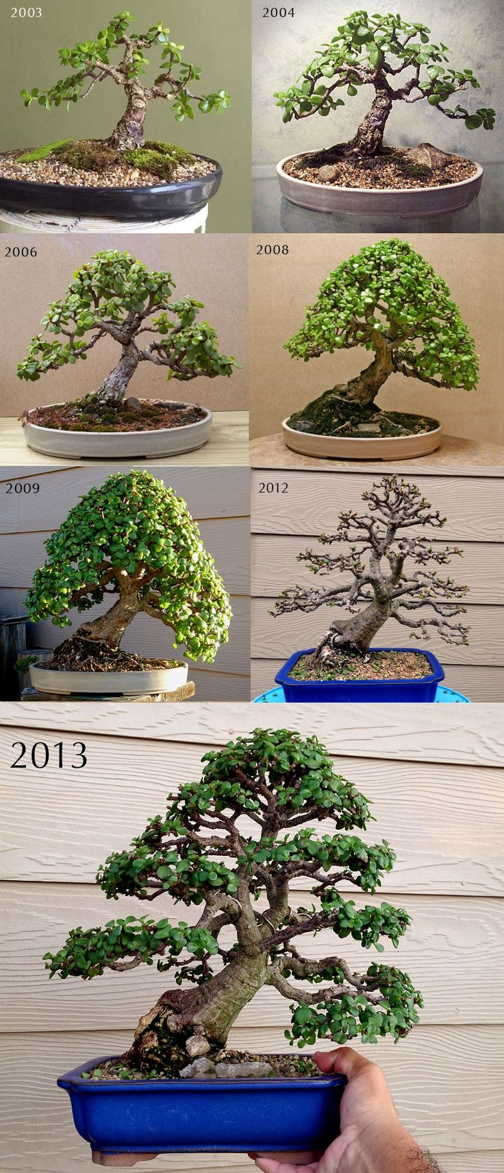 1000 Ideas About Bonsai Garden On Pinterest Bonsai Bonsai