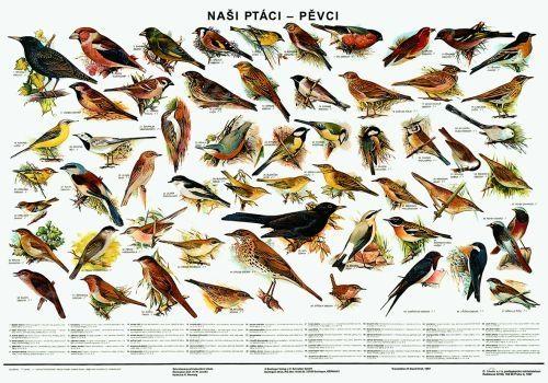 https://www.levneucebnice.cz/p/plakat-nasi-ptaci-pevci/