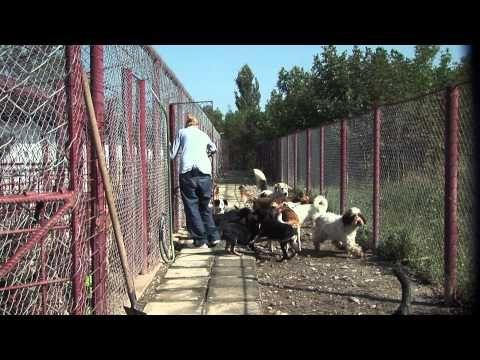 'Man's Best Friend' Documentary on Romanian stray dogs - Trailer in Romanian - YouTube