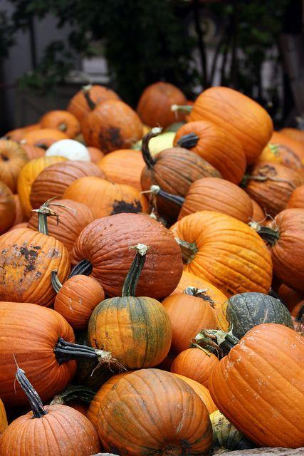 Pumpkin Puns