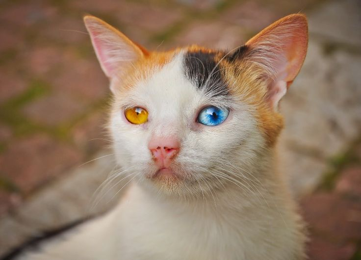 The beautiful strange-eyed kitten ~ Amazing World Online